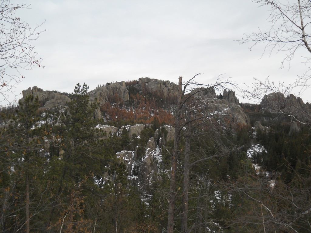 hiking and black hills Cathedral spires hiking trail, custer: we have traveled to the black hills many times and have never heard of bears being present or warned about.
