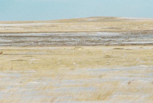 Sage Creek Basin Badlands National Park