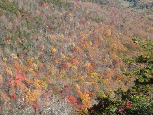 Great Smoky Mountain fall color