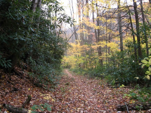 Great Smoky Mountains fall color