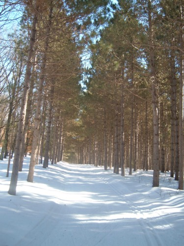 Black River State Forest Wisconsin