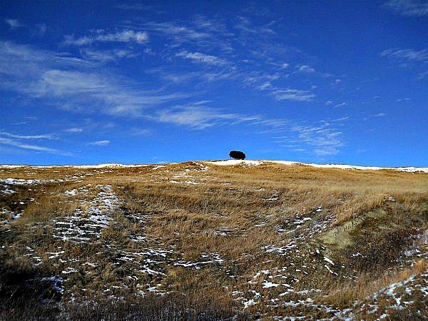 One tree Badlands National Park