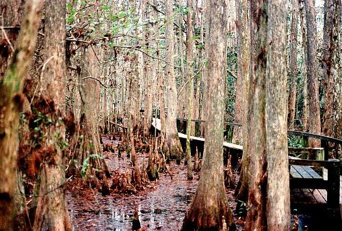 Cypress Avenue Florida