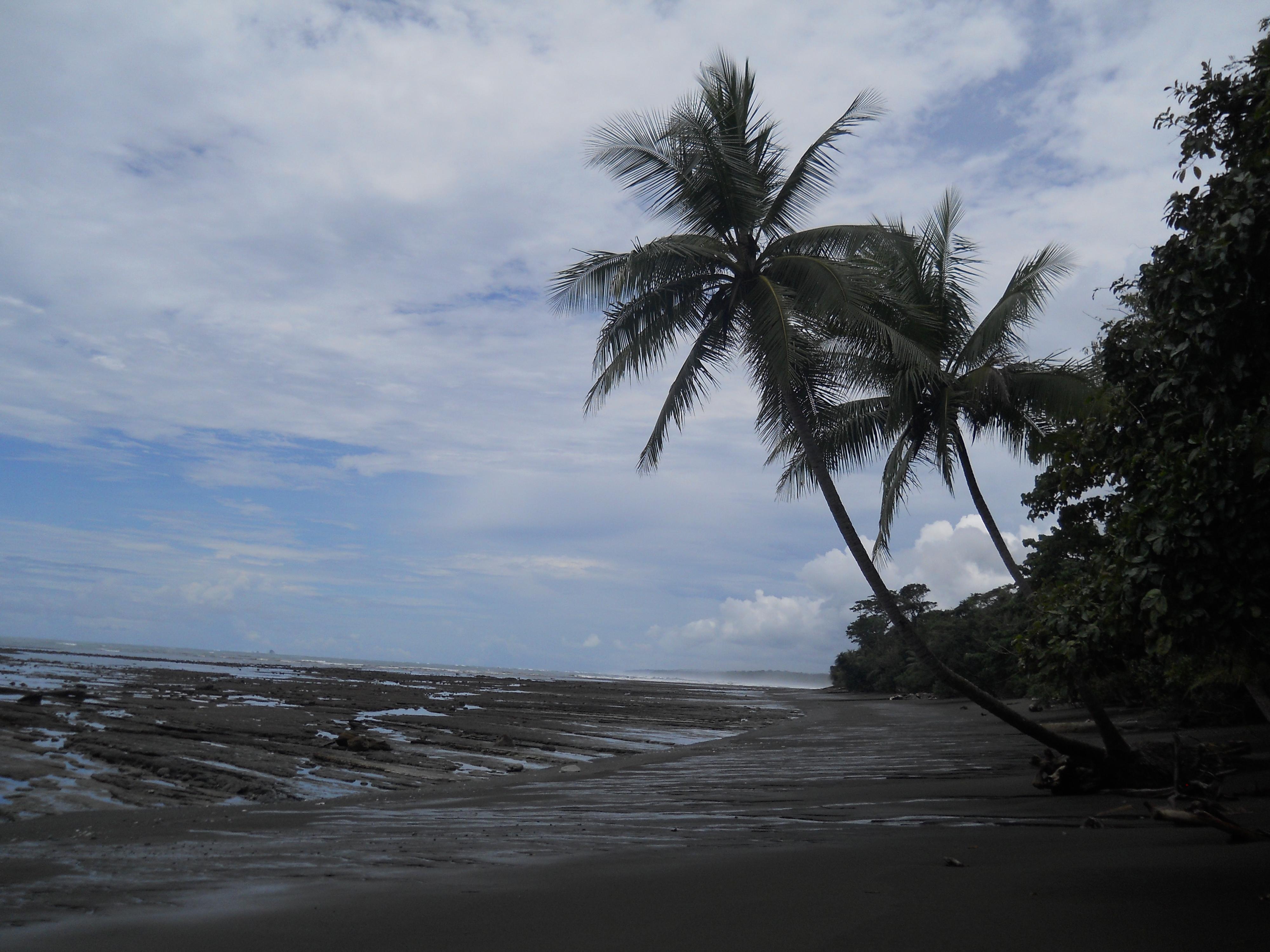 Corcovado National Park Costa Rica
