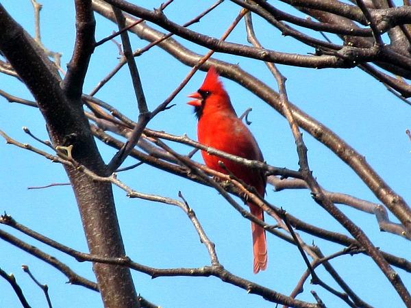 Cardinal tweeting