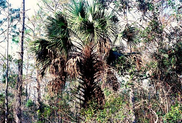 Everglades flora