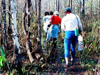 Everglades swamp walk