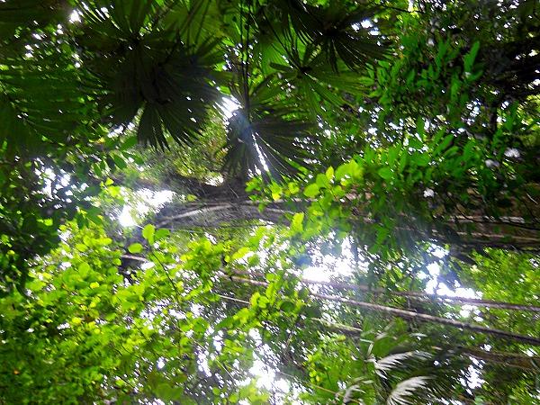 Corcovado rainforest