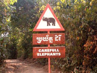 Elephant crossing at Angkor Wat