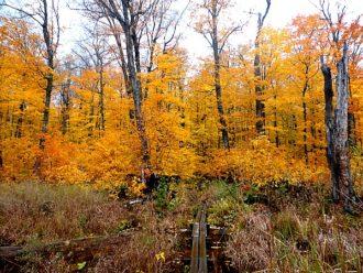 Porcupine Mountain fall color