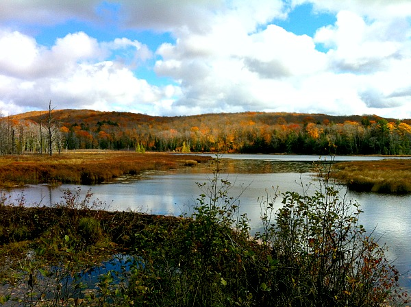 Lily Pond Porcupine Mountains