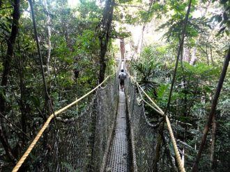 Iwokrama Rainforest Canopy Walkway