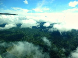 Guyana rainforest