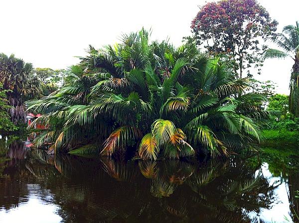 Georgetown Guyana Botanic Gardens