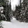 Pincushion Mountain ski trails