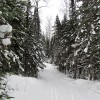 Pincushion Mountain cross-country ski trail