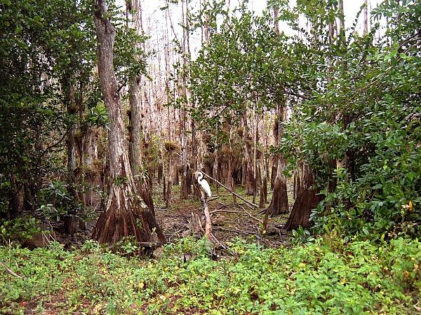 Everglades National Park adventures