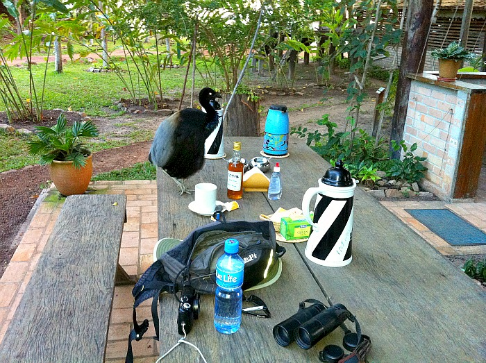 Afternoon tea Guyana