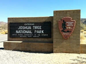 Joshua Tree National Park roadside adventure