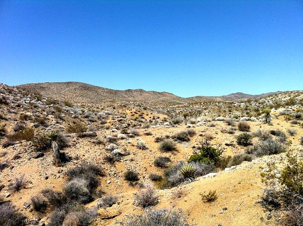 Joshua Tree golden desert