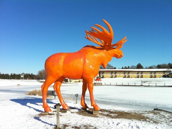 Orange Moose Wisconsin