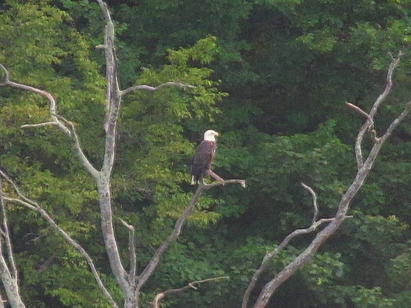 bald eagle photo essay