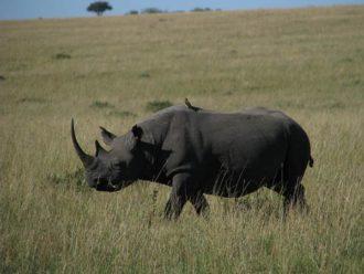 Kenya safari spots