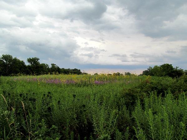 Younghusband Prairie