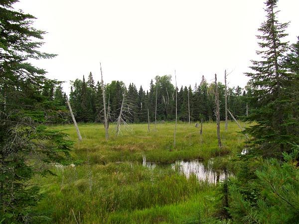 Isle Royale National Park bog