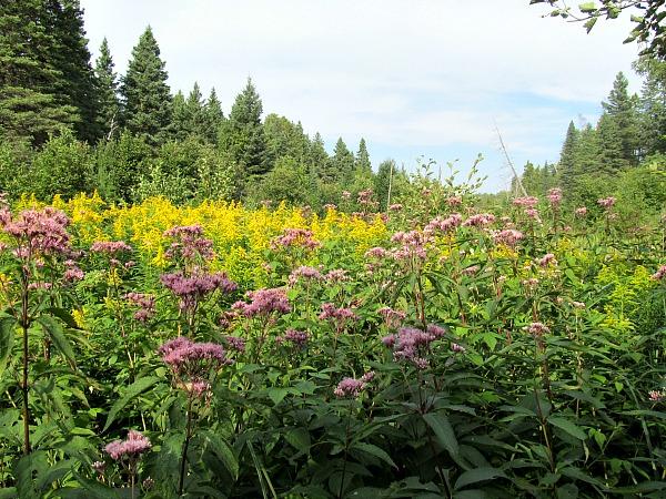 Isle Royale National Park wildflowers