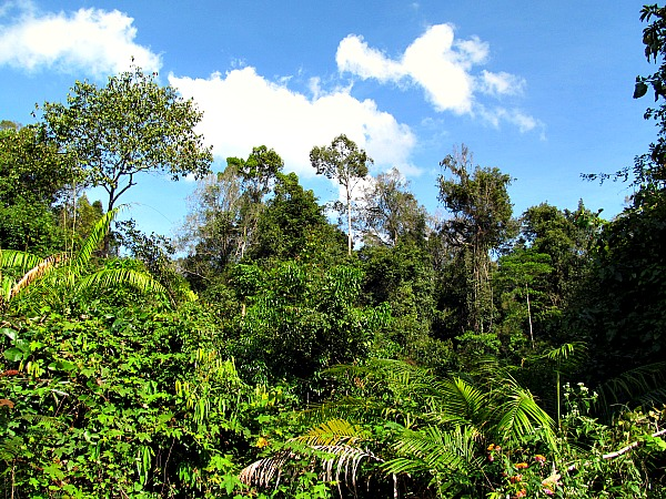 Khao Yai National Park day one