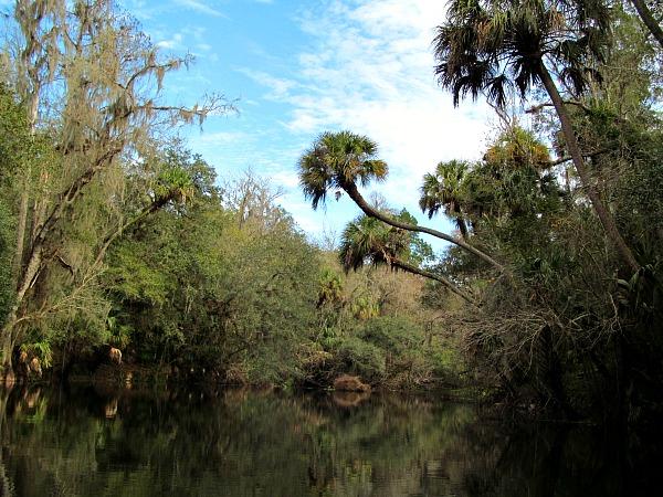 Canoeing Hillsborough River
