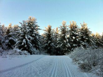 Birkie workout Nordic Trail