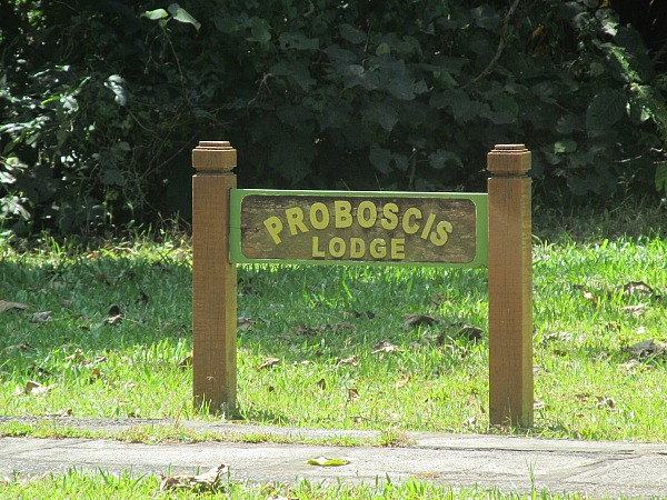 Proboscis lodge Bako
