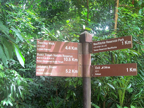 Singapore MacRitchie Reservoir adventure