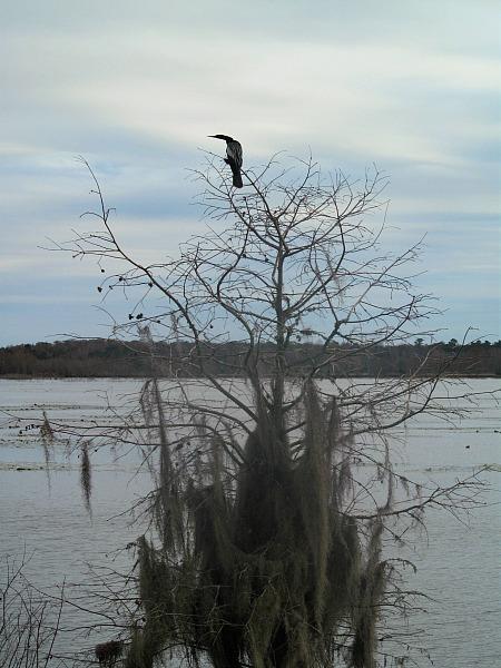 Great Florida Birding Trail Alligator Lake
