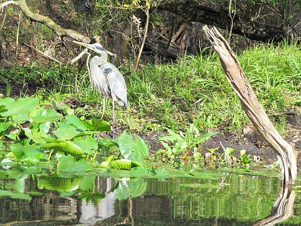 Great Florida birding trail