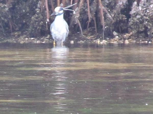 Weedon Island Preserve Tampa Bay
