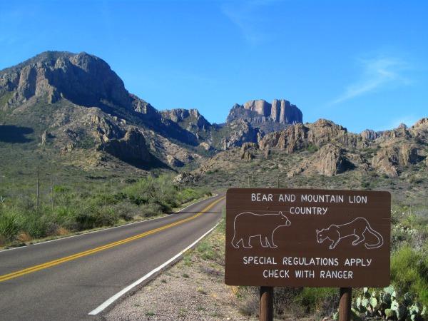 Bear mountain lions Big Bend