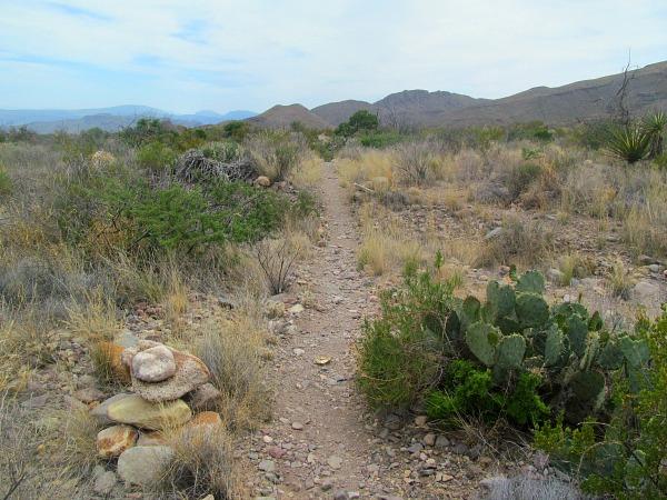 Chihuahuan Desert Big Bend