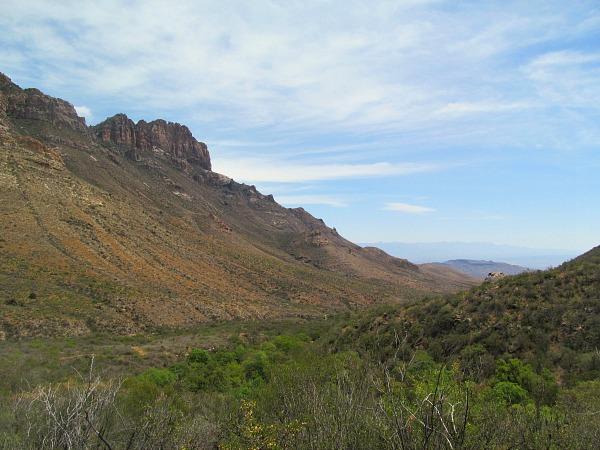 Big Bend Juniper Canyon Texas