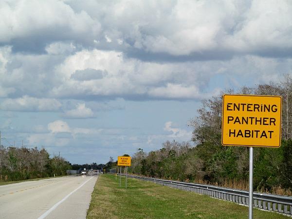 Florida panther road signs