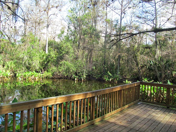 Big Cypress Boardwalk Bend Trail