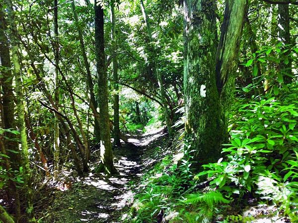 Black bear encounter Appalachian Trail