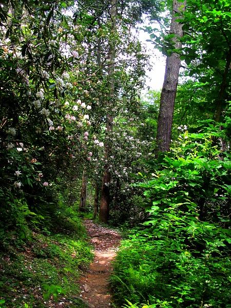 Great Smoky Mountain backcountry trail