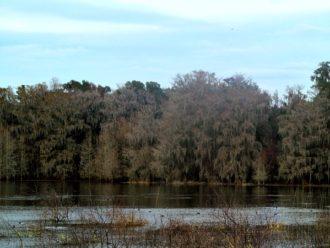 Alligator Lake Recreation Area Florida