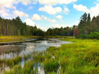 Canadian beaver pond