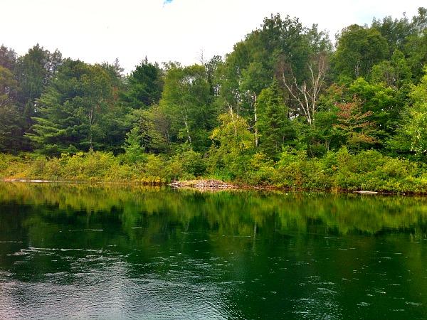 Beaver house Reynolds Lake