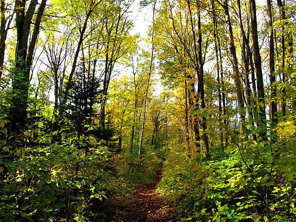 Pictured Rocks forest