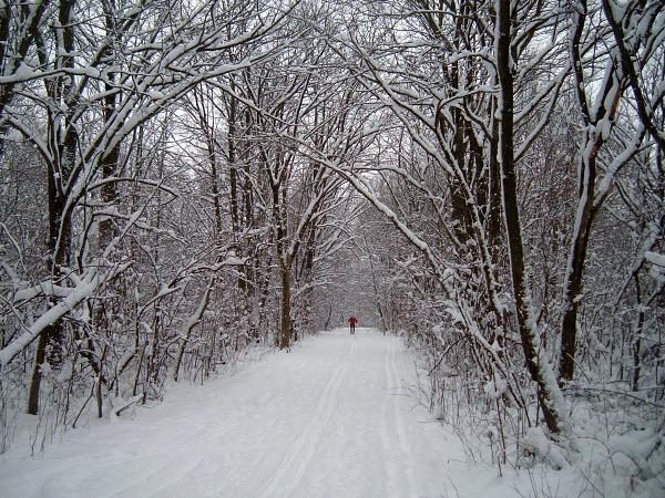 Deer Grove snowy trail